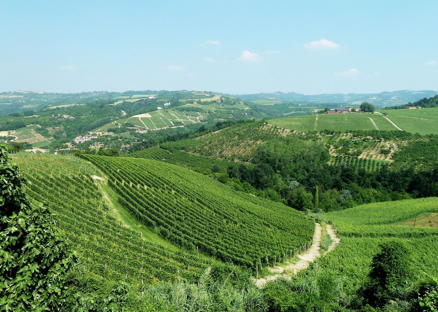 canale-to-barolo-cycling-holiday-in-italy-piemontes-vineyards-and-views.jpg - Italy - Piemonte - Vineyards and Views - Self-Guided Leisure Cycling Holiday - Leisure Cycling