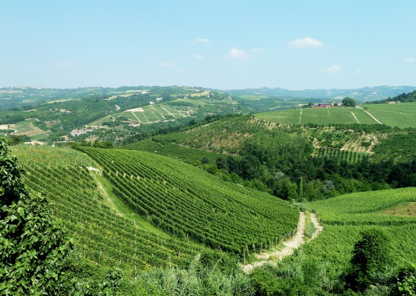 canale-to-barolo-cycling-holiday-in-italy-piemontes-vineyards-and-views.jpg - Italy - Piemonte's Vineyards and Views - Self-Guided Leisure Cycling Holiday - Leisure Cycling