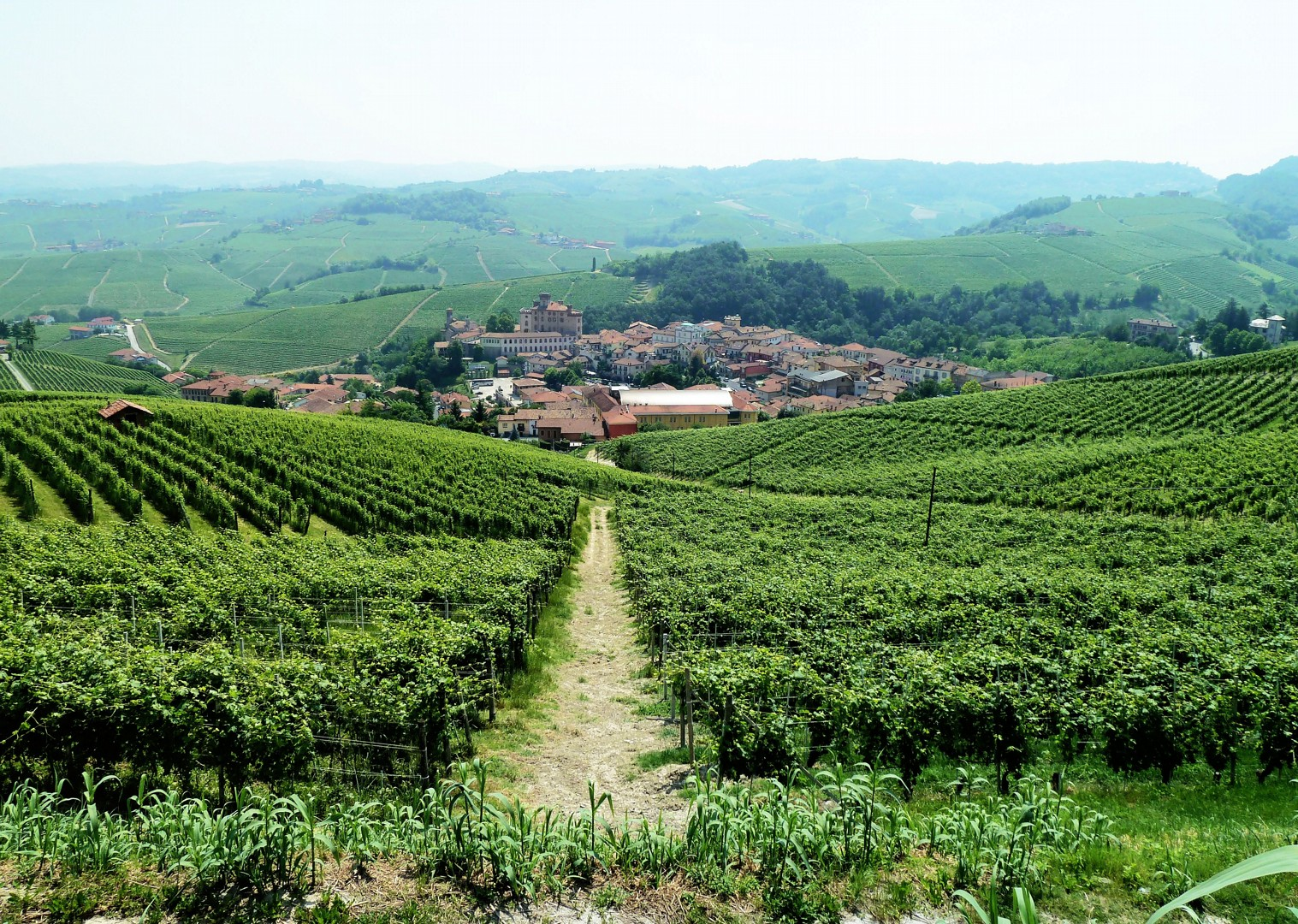 langhe-italy-piemontes-vineyards-and-views-self-guided-leisure-cycling-holiday.jpg - Italy - Piemonte's Vineyards and Views - Leisure Cycling