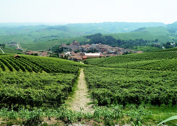 langhe-italy-piemontes-vineyards-and-views-self-guided-leisure-cycling-holiday.jpg - Italy - Piemonte's Vineyards and Views - Self-Guided Leisure Cycling Holiday - Leisure Cycling