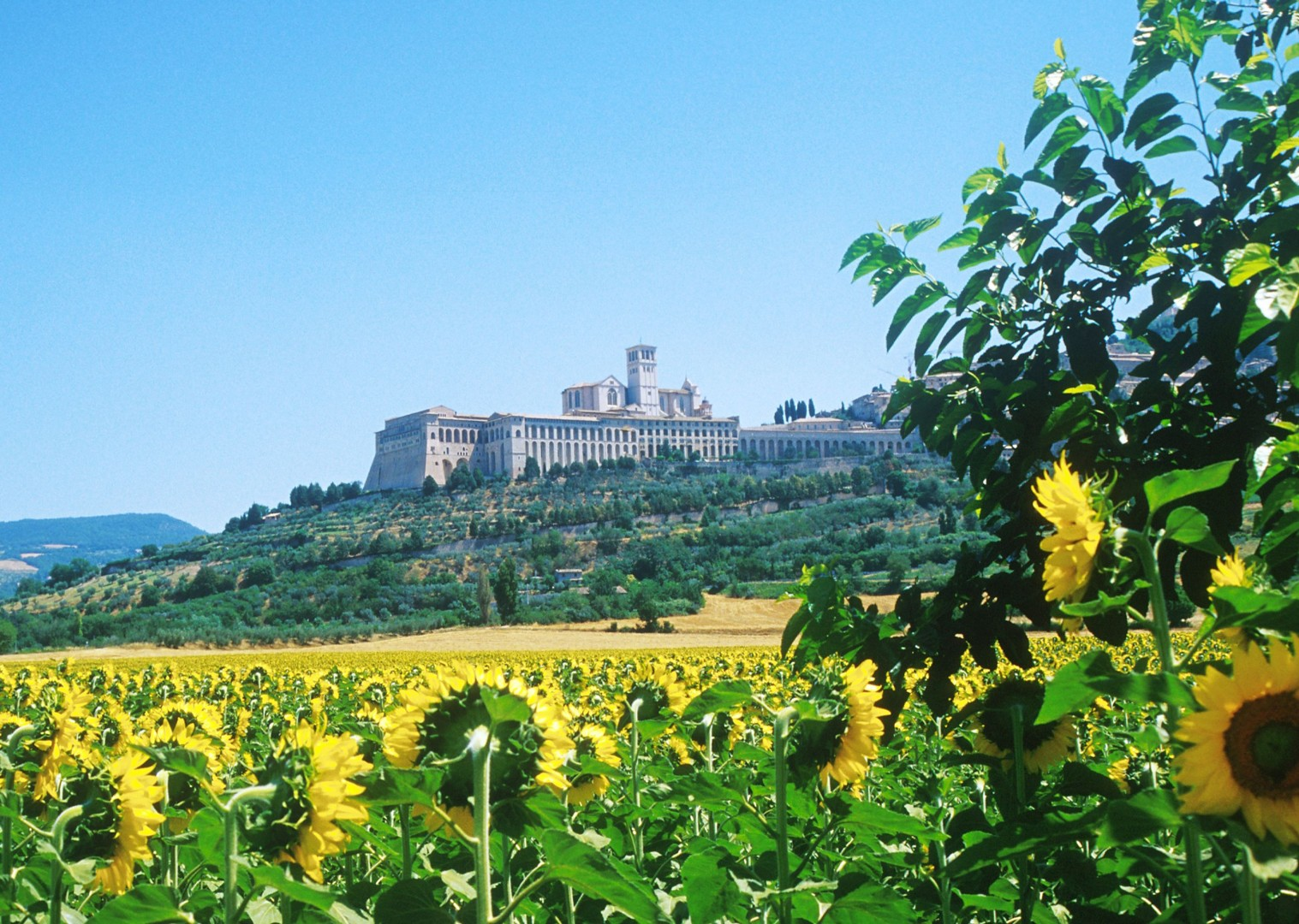 basilica-of-assisi-leisure-cycling-holiday-italy-green-heart-of-umbria.jpg - Italy - Green Valley of Umbria - Self-Guided Leisure Cycling Holiday - Leisure Cycling