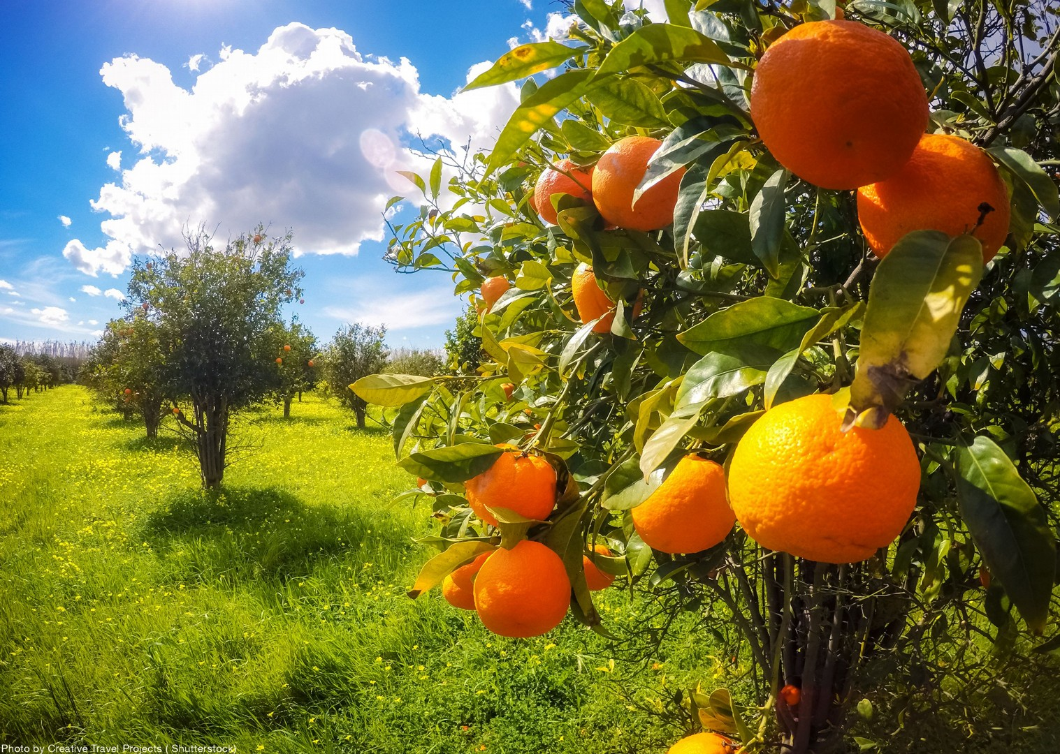 local-nature-orchards-italy-leisure-biking-fun.jpg - Italy - Sicily - Self-Guided Leisure Cycling Holiday - Leisure Cycling