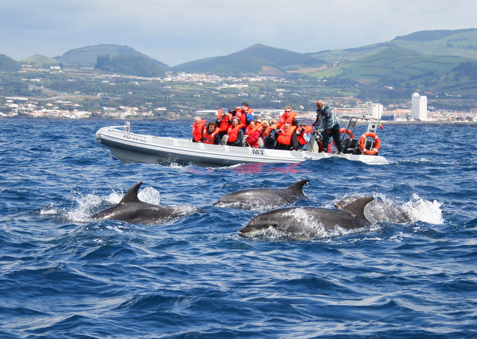 faial-de-terra-whale-watching-azores-adventures-family-cycling-trip.jpg - The Azores - Island Discoverer - Family Cycling