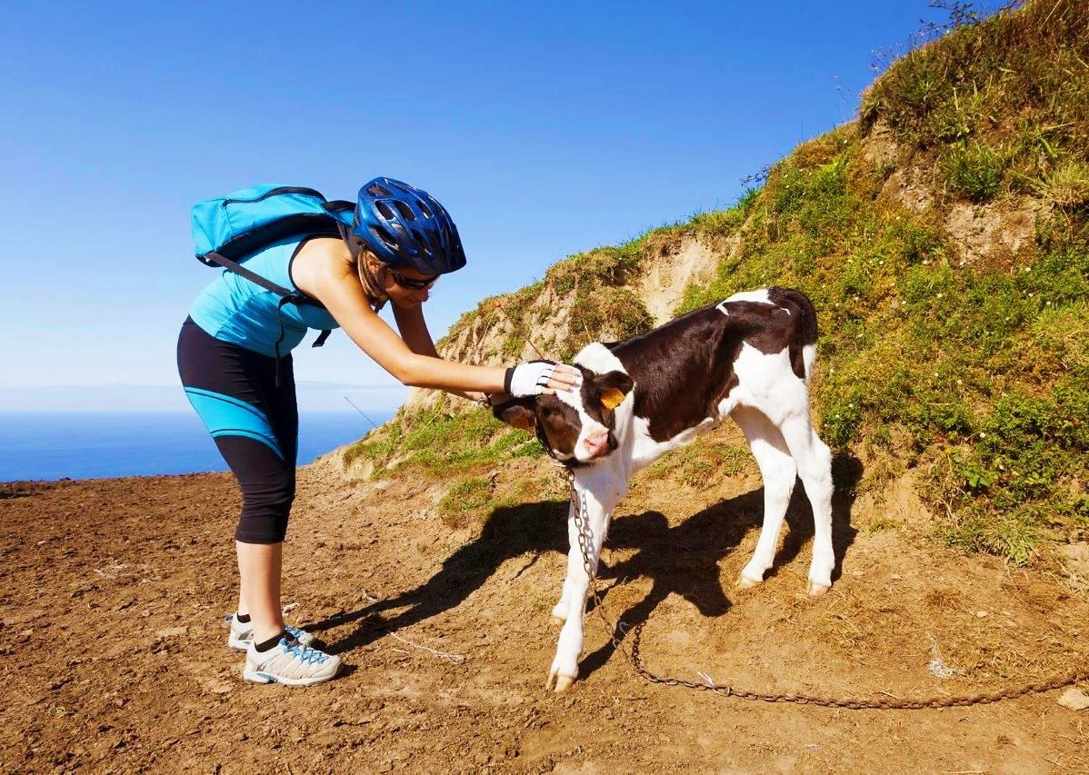 cow-wildlife-azores-portugal-family-cycling-holiday.jpg - The Azores - Island Discoverer - Family Cycling
