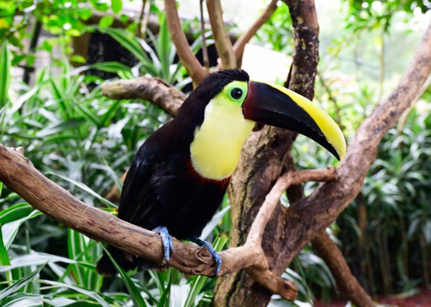 wildlife-costa-rica-bird-watching-family-cycling-holiday.jpg - Costa Rica - Volcanoes and Valleys - Family Cycling