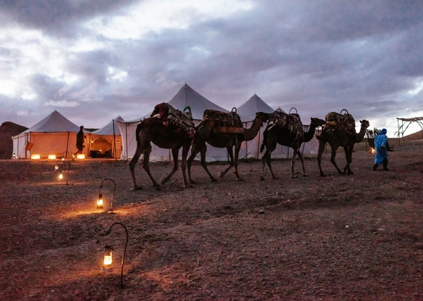 Family-Cycling-Holiday-Morocco-Desert-Mountains-Coast-Camels-ride-a-camel-desert - Morocco - Desert, Mountains and Coast - Guided Family Cycling Holiday - Family Cycling