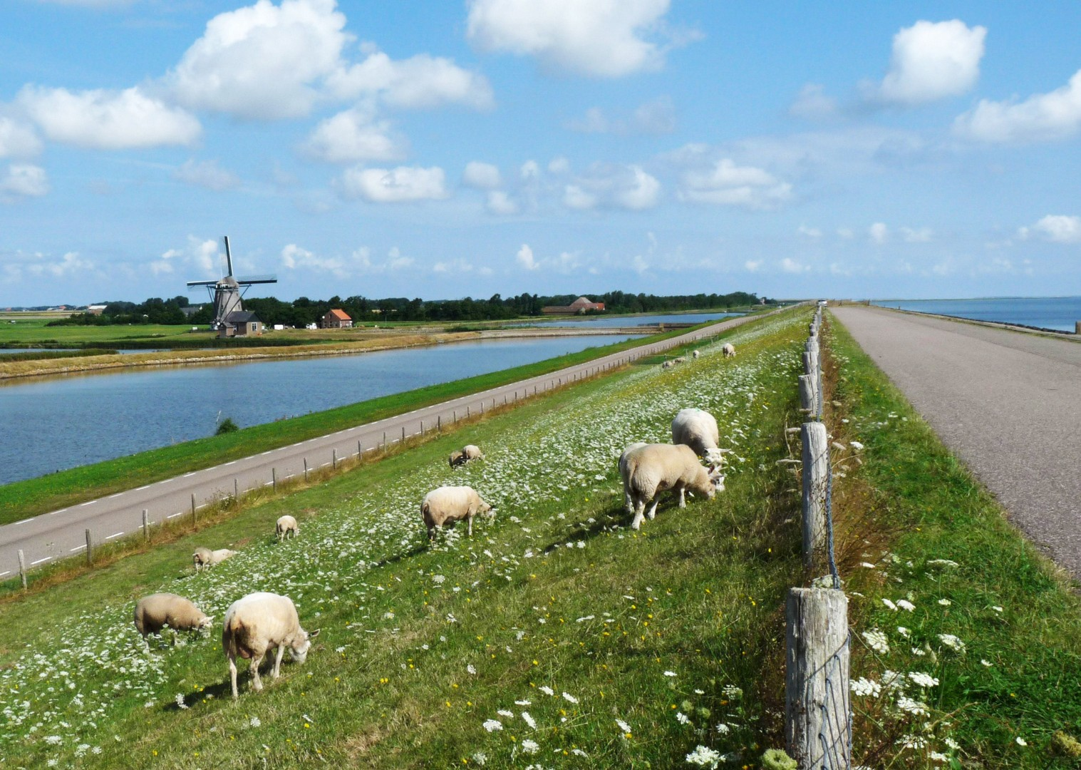 cycle-through-nature-reserve-by-golden-beaches.jpg - Holland - Windmills and Golden Beaches - Bike and Barge Holiday - Family Cycling