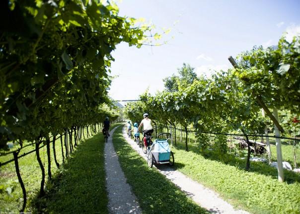 vineyard-italy-cycling-self-guided.jpg - Italy - Lake Garda Explorer - Self-Guided Family Cycling Holiday - Family Cycling