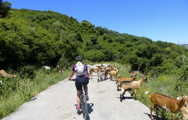 More wildlife.jpg - Southern Spain - Sierras to the Sea - Self-Guided Cycling Holiday - Leisure Cycling
