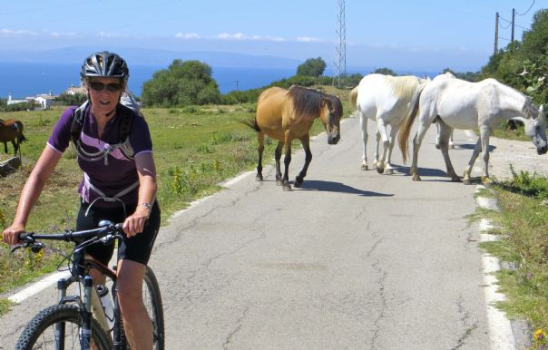 Three Horse Power.jpg - Southern Spain - Sierras to the Sea - Self-Guided Cycling Holiday - Leisure Cycling