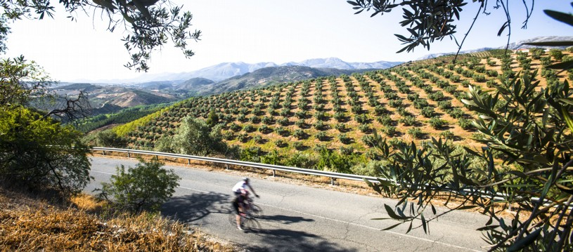 Festive fun this way! If you fancy escaping the holiday frenzy this year, why not join us in sunny Southern Spain? Our ride explores the wonderful local hill-top towns and eclectic Andalucian culture.