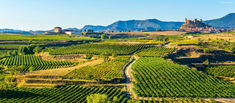 A tour of grape expectations! Don't miss our guided journey through the heart of Rioja, a world-renowned region famed for its lip-smacking grapes. Hey, we might even let you try a few tasty tipples...