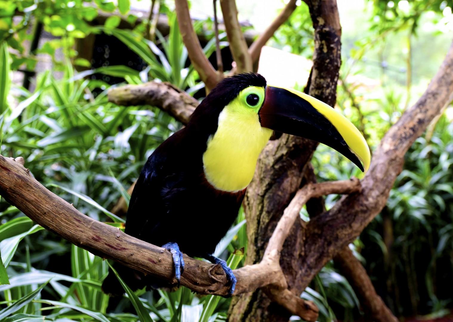 Costa Rica_014.jpg - Costa Rica - Volcanes y Playas - Cycling Adventures