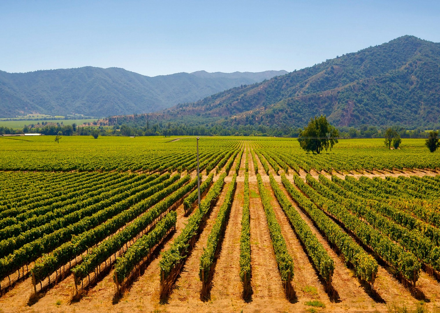chilewinetour4.jpg - Chile - Wine Country - Cycling Adventures