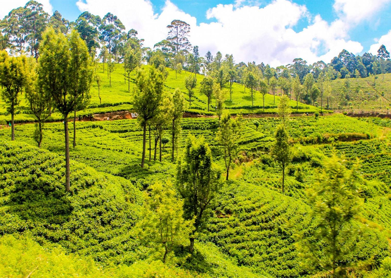 IMG_4869.jpg - Sri Lanka - Backroads and Beaches - Cycling Adventures