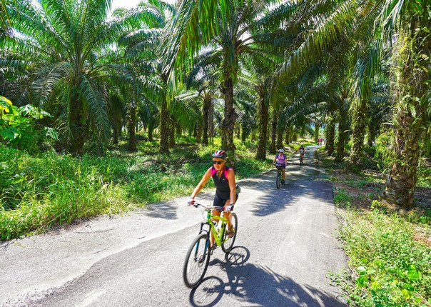 Borneo - Secret Sarawak - Cycling Holiday Image
