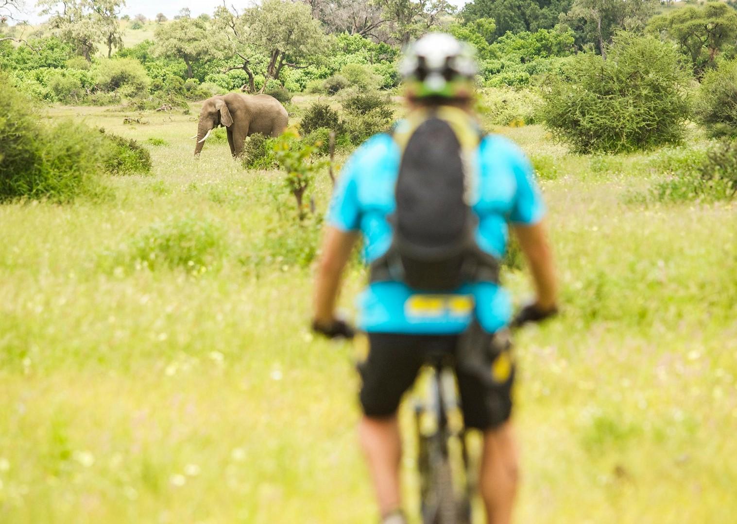 wilderness-south-africa-botswana-mountain-bike-elephants-holiday-saddle-skedaddle.jpg - NEW! South Africa and Botswana - Mountain Biking