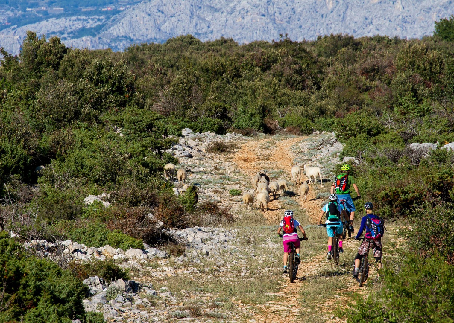 fun-singletrack-with-epic-sea-views-mountain-biking-croatia.jpg - Croatia - Terra Magica - Mountain Biking