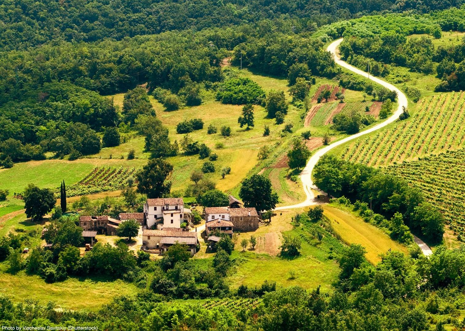 motovun-croatia-and-slovenia-road-cycling-holiday-saddle-skedaddle.jpg - Slovenia & Croatia - Julian Alps & Istria - Guided Road Cycling Holiday - Road Cycling