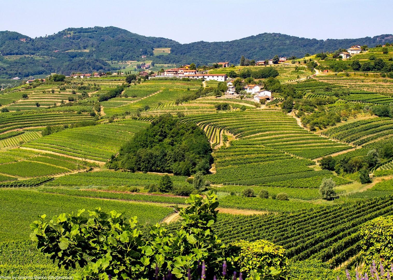 slovenia-and-croatia-tour-guided-road-cycling-holiday-skedaddle.jpg - Slovenia & Croatia - Julian Alps & Istria - Guided Road Cycling Holiday - Road Cycling