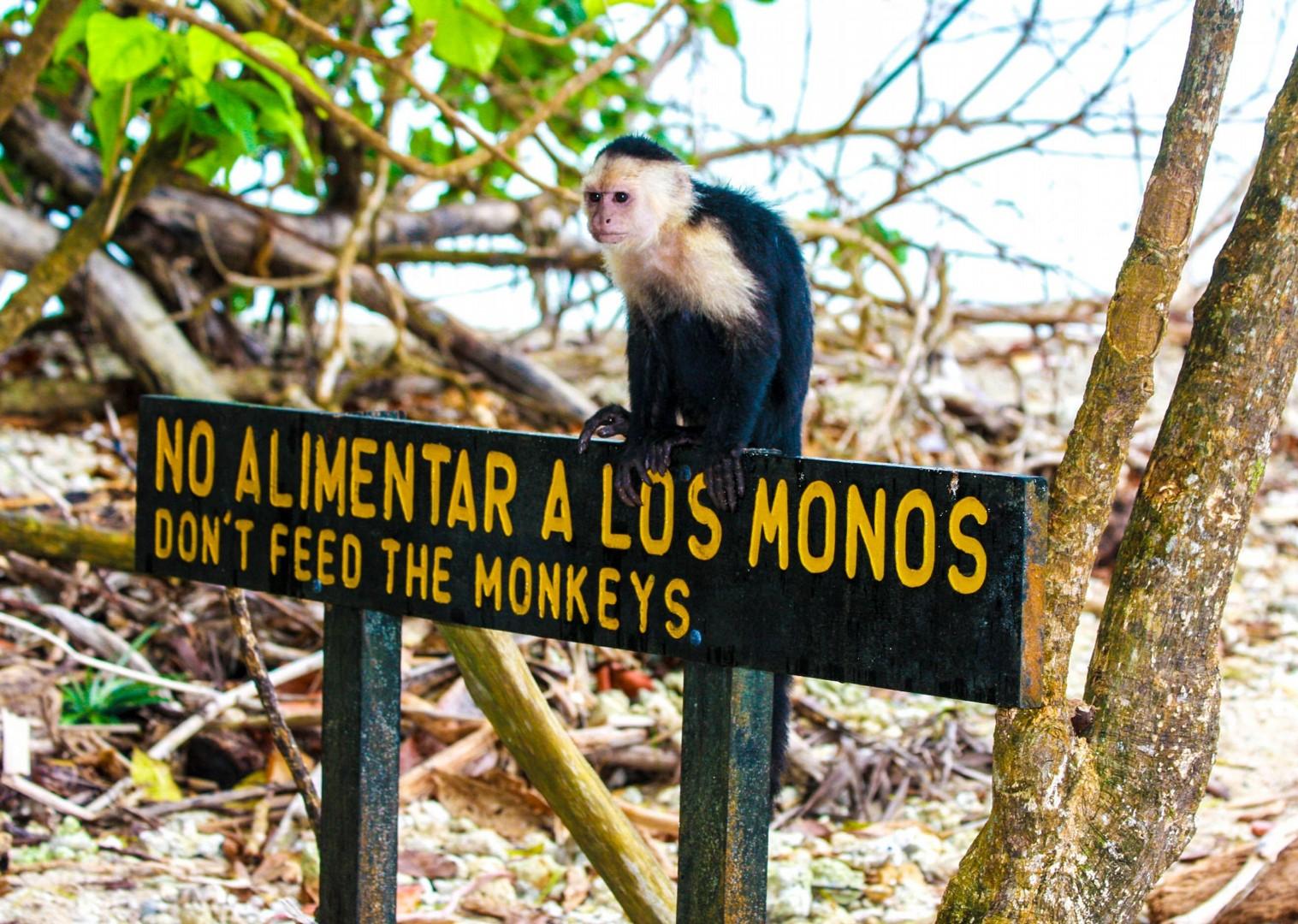 4885073294_019fb507ea_o.jpg - Costa Rica - Ruta de los Volcanes - Road Cycling