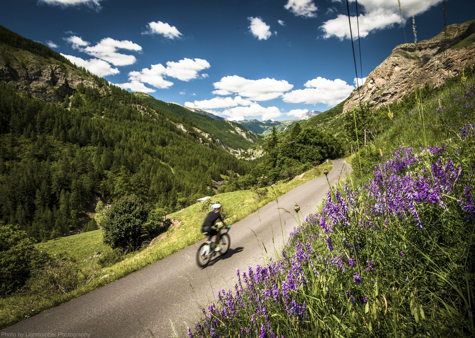 provencal-lavender-french-alpes-road-cycling-trip.jpg - France - Alps - Mont Ventoux to Alpe d'Huez - Guided Road Cycling Holiday - Road Cycling