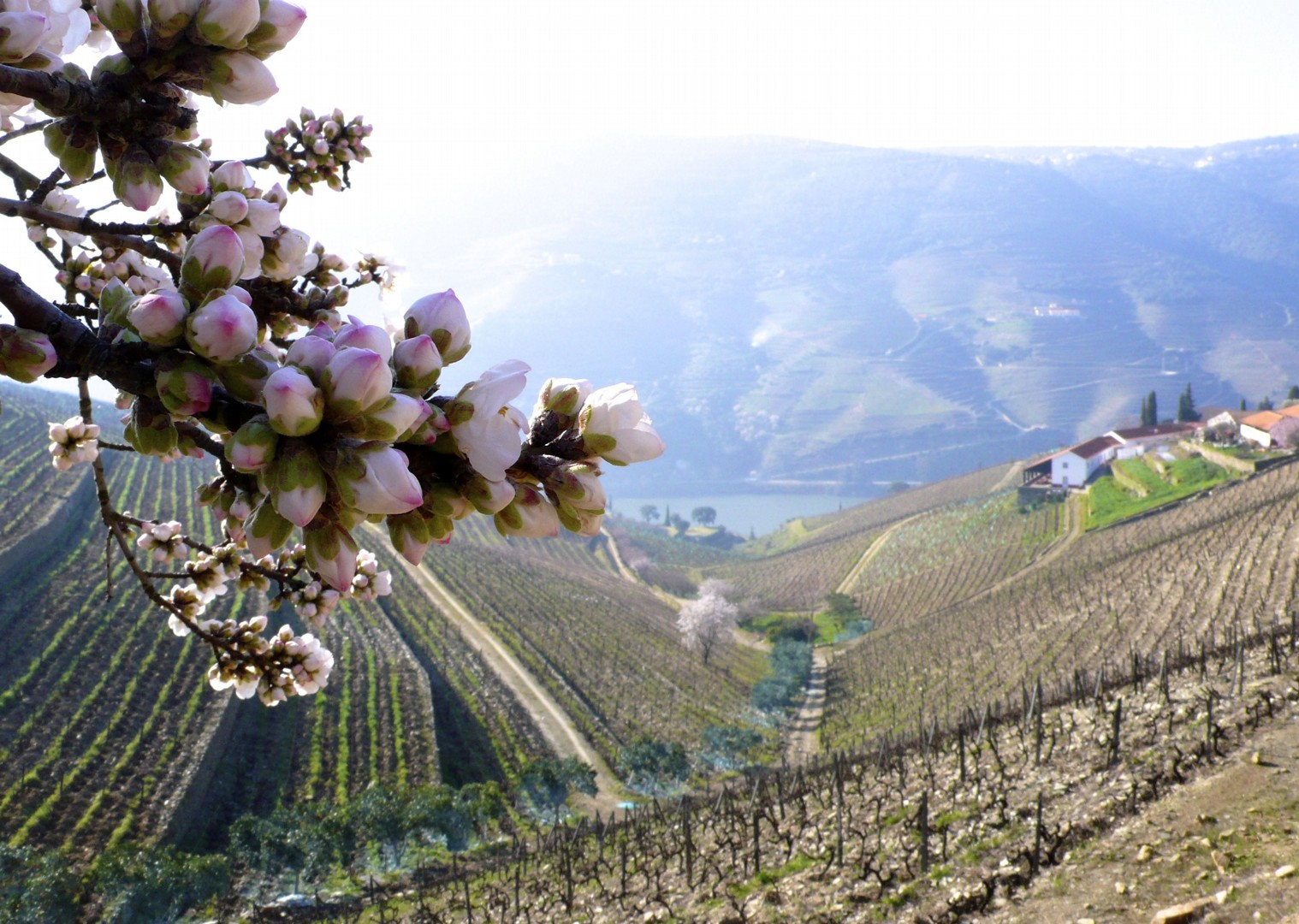 portugalduoro4.jpg - Portugal - Vineyards of the Douro Valley - Guided Road Cycling Holiday - Road Cycling