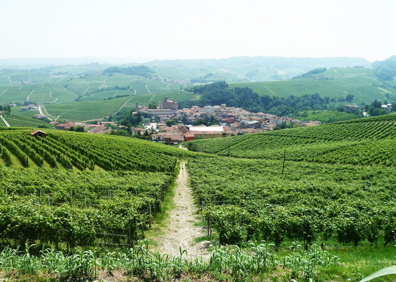 road-cycling-holiday-italy-piemonte.jpg - Italy - Piemonte - La Strada del Vino - Guided Road Cycling Holiday - Road Cycling