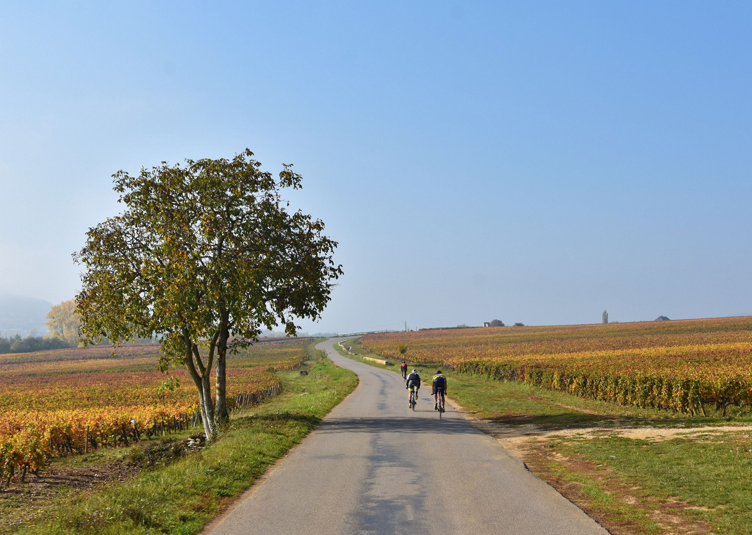 wine-regions-of-france-on-bike-skedaddle.jpg - NEW! France - Alsace, Burgundy and Beaujolais - Road Cycling