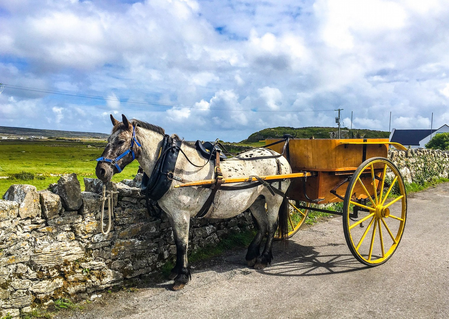 self-guided-cycling-saddle-skedaddle-in-ireland-holiday.jpg - NEW! Ireland - Connemara and the Aran Isles - Leisure Cycling