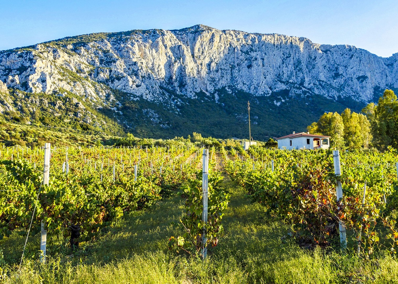 Su Gologne - vineyard and mountains-2.jpg - Italy - Sardinia - Island Flavours - Guided Leisure Cycling Holiday - Leisure Cycling