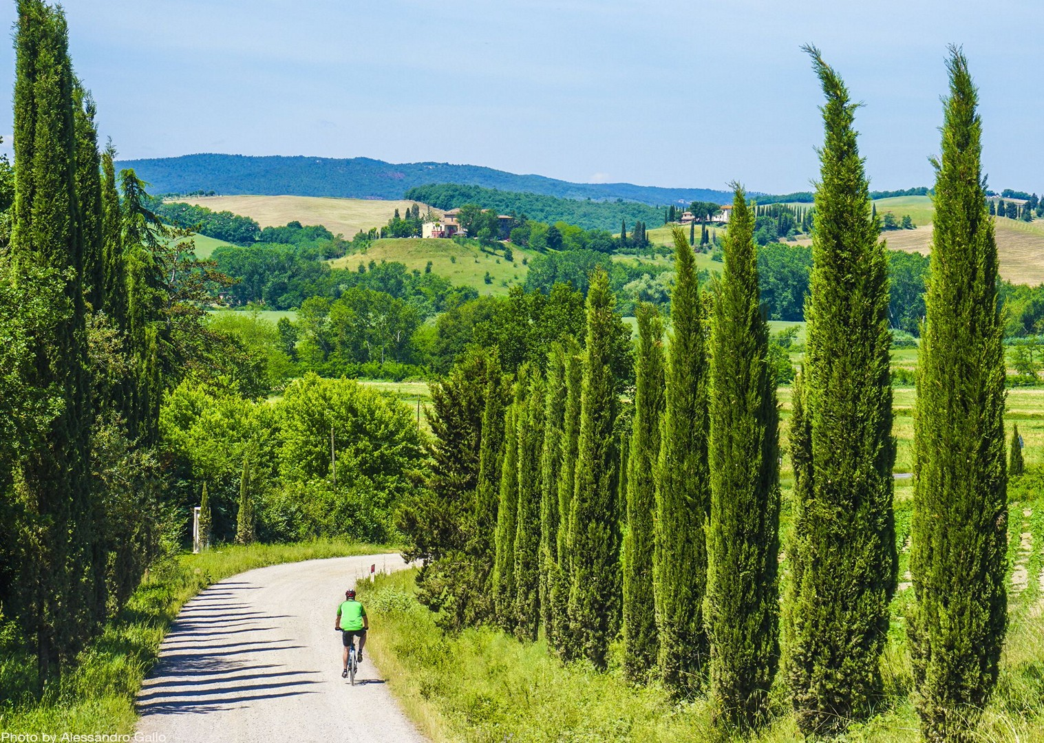 cypress-trees-tuscany-sights-by-bike-fields-self-guided.jpg - Italy - Classic Tuscany - Self-Guided Leisure Cycling Holiday - Leisure Cycling