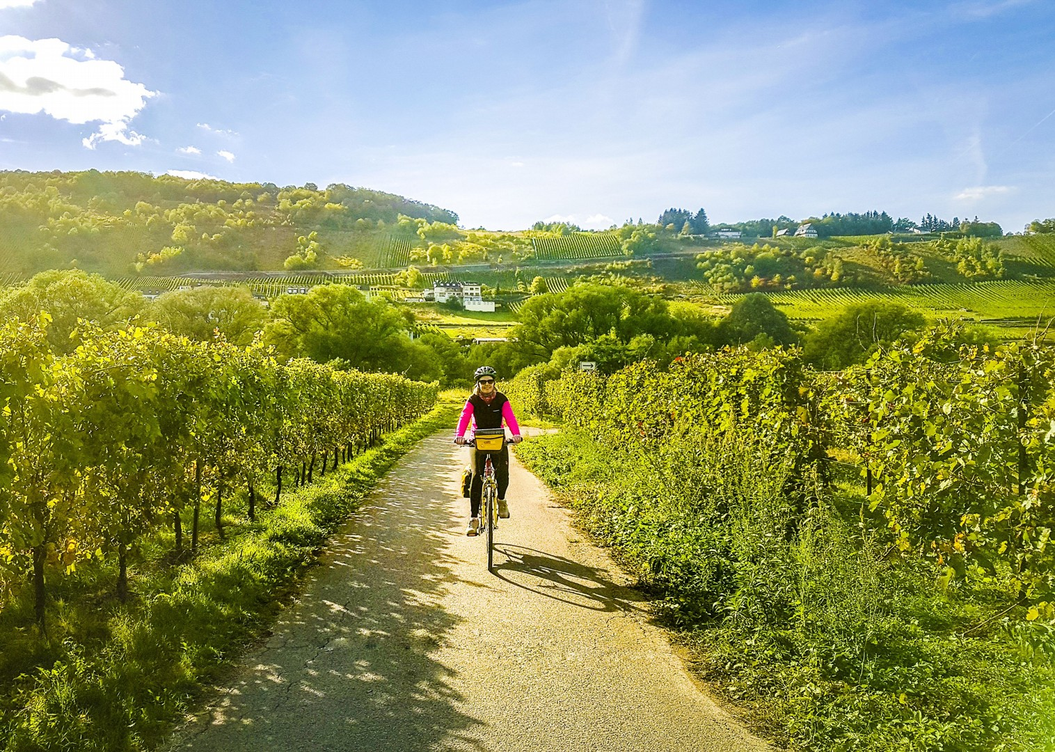 german-vineyards-cycling-moselle-valley-wine-skedaddle.jpg - Germany - Moselle Valley - Self-Guided Leisure Cycling Holiday - Leisure Cycling