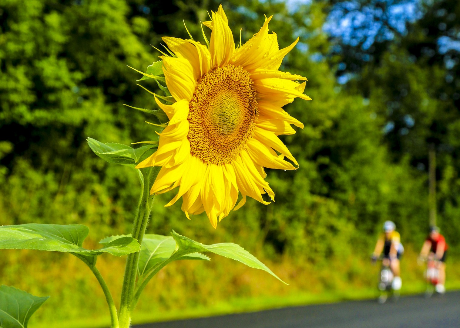 local-flowers-countryside-burgundy-france-cycling-tour-region.jpg - France - Burgundy - Caves and Canals - Self-Guided Leisure Cycling Holiday - Leisure Cycling