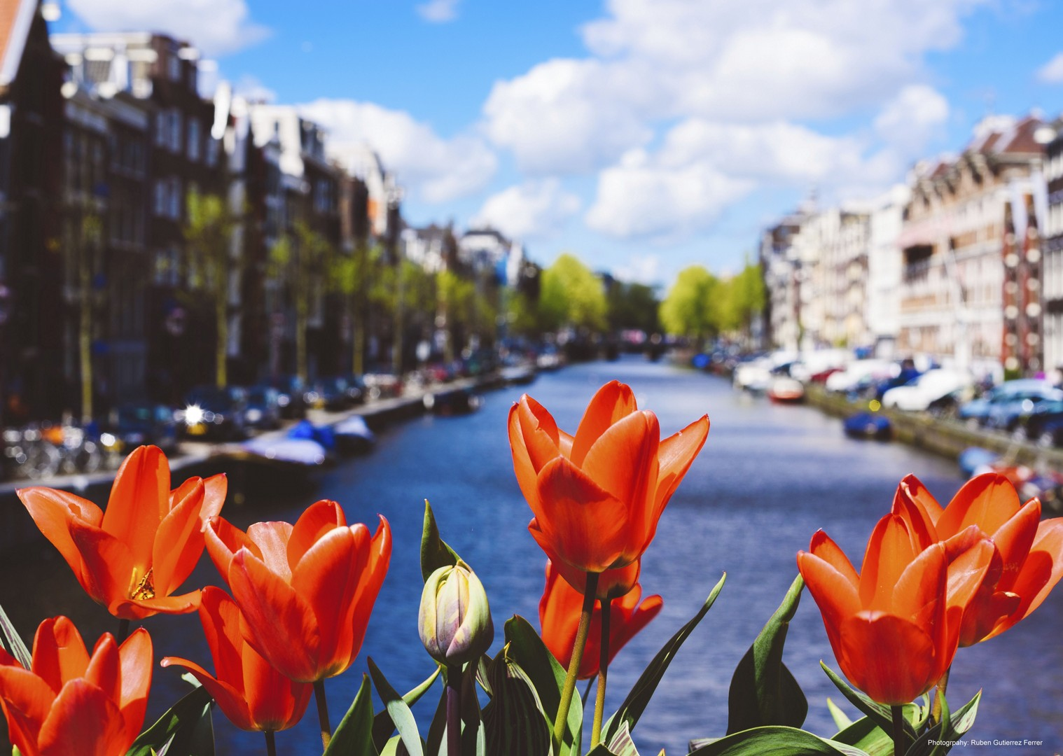 lesiure-cycling-holiday-holland-amsterdam-bike-and-boat-tulip-tour.jpg - Holland - The Tulip Tour - Bike and Barge Holiday - Leisure Cycling
