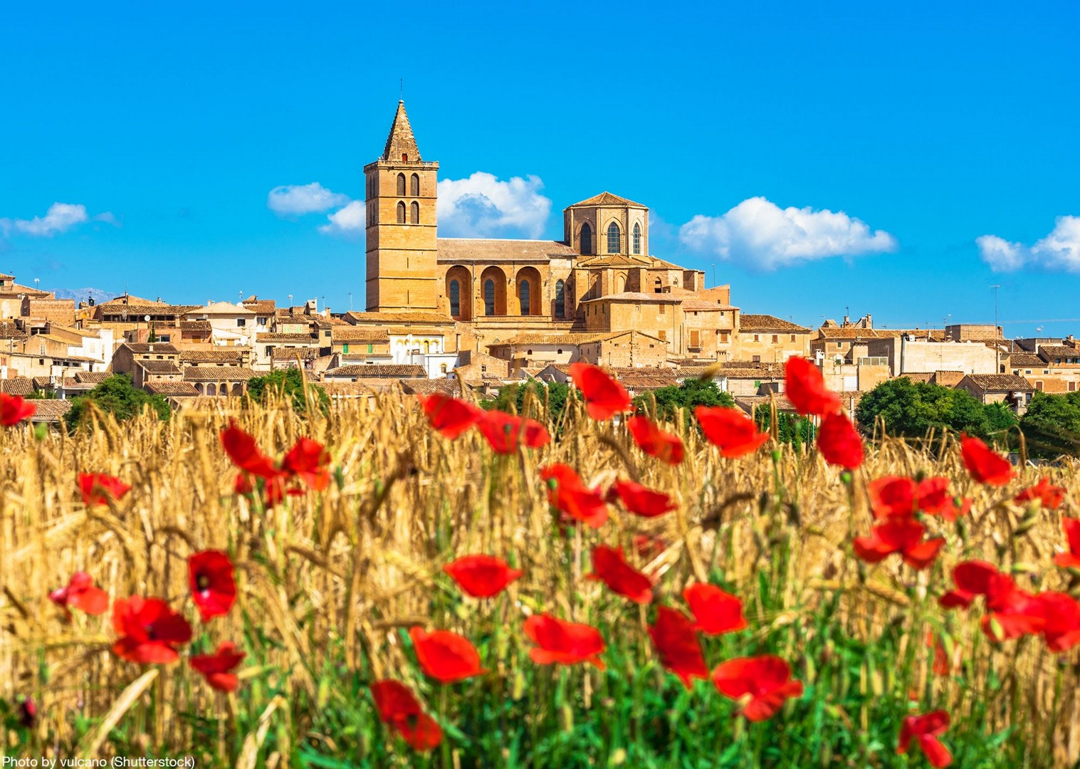 cistus-roses-traditional-mallorca-experience-self-guided-cycling.jpg - Spain - Mallorca - Self-Guided Leisure Cycling Holiday - Leisure Cycling