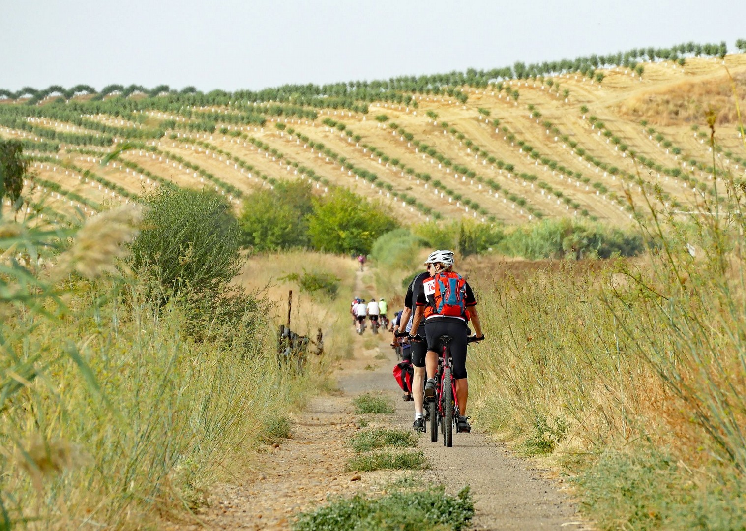 andalucia-cycling-holiday-in-spain-granada-seville.jpg - Spain - Granada to Seville - Guided Leisure Cycling Holiday - Leisure Cycling