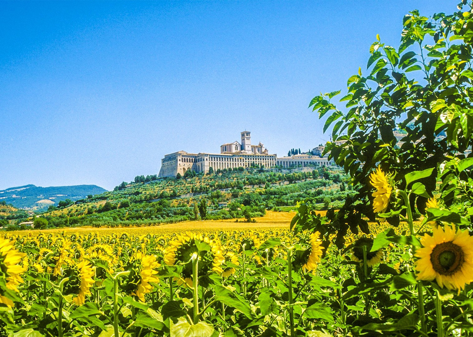 7.jpg - Italy - Green Valley of Umbria - Self-Guided Leisure Cycling Holiday - Leisure Cycling
