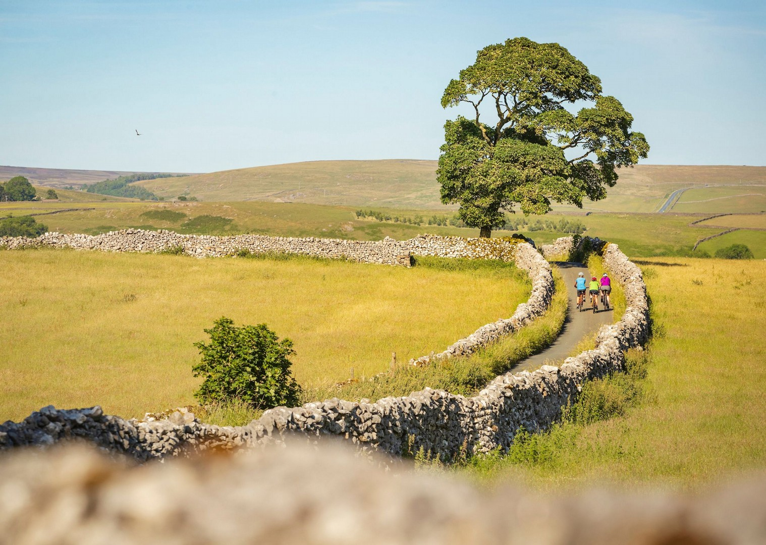 fields-of-yorkshire-bike-tour-saddle-skedaddle-leisure.jpg - UK - Way of the Roses 5 Days Cycling - Self-Guided Leisure Cycling Holiday - Leisure Cycling