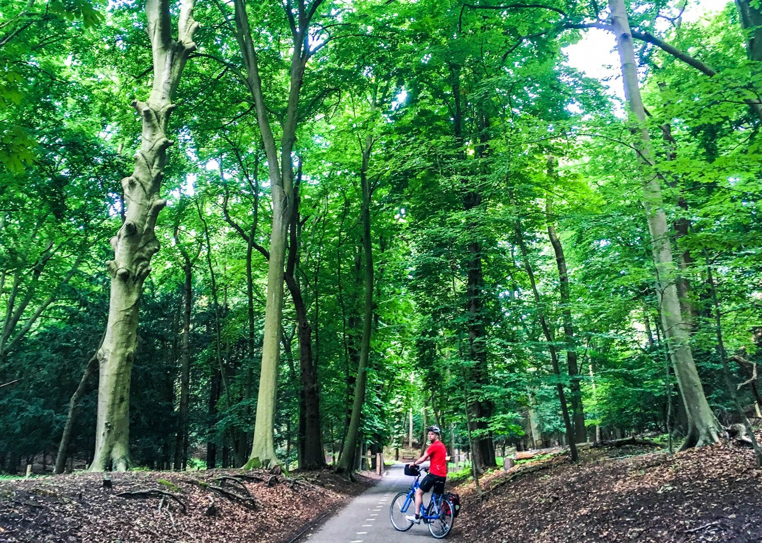 dutch-discoverer-holland-family-cycling-holiday-saddle-skedaddle-trip.jpg - NEW! Holland - Dutch Discoverer - Canals and Castles - Family Cycling