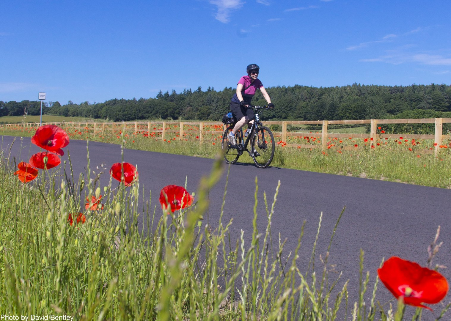 poppy-fields-hardians-cycleway-self-guided-countryside-riding.jpg - UK - Hadrian's Cycleway - 4 Days Cycling - Self-Guided Family Cycling Holiday - Family Cycling