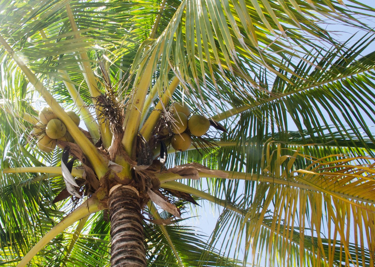 palm-trees-costa-rica-family-cycling.jpg - Costa Rica - Volcanoes and Valleys - Guided Family Cycling Holiday - Family Cycling