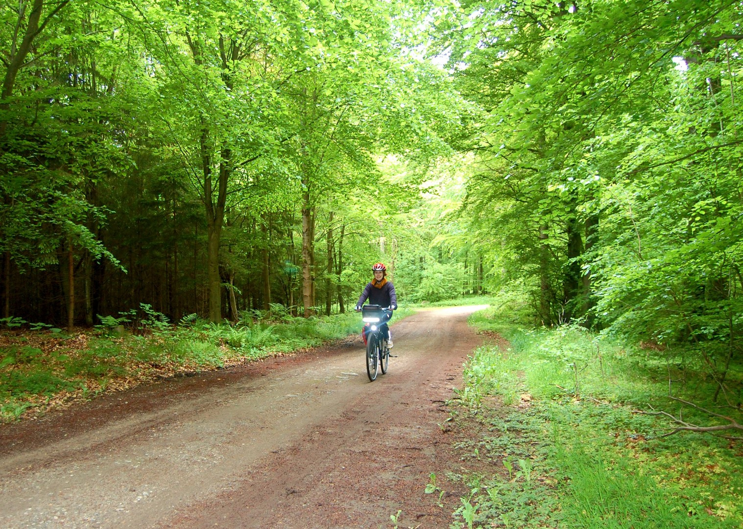denmark-forest-cycling-children-holiday.jpg - NEW! Denmark - Zooming Through Zealand - Family Cycling
